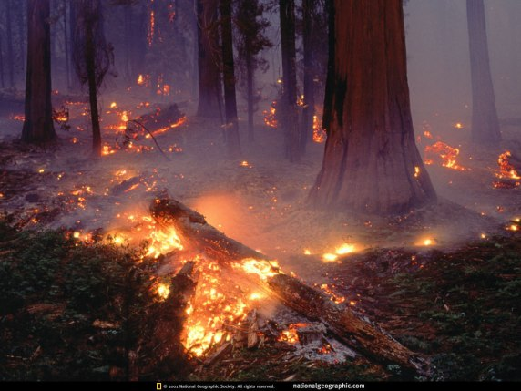 Seqouia_Forest_Fire